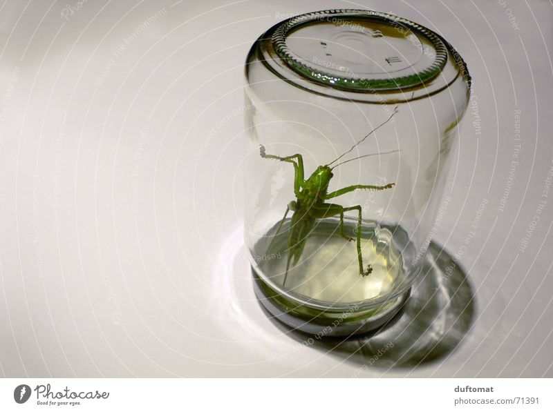 Green Animal Freedom Glass Glass Large Fresh Nutrition Creepy Insect Bottle Organic produce Captured Rebellious Disappointment Locust