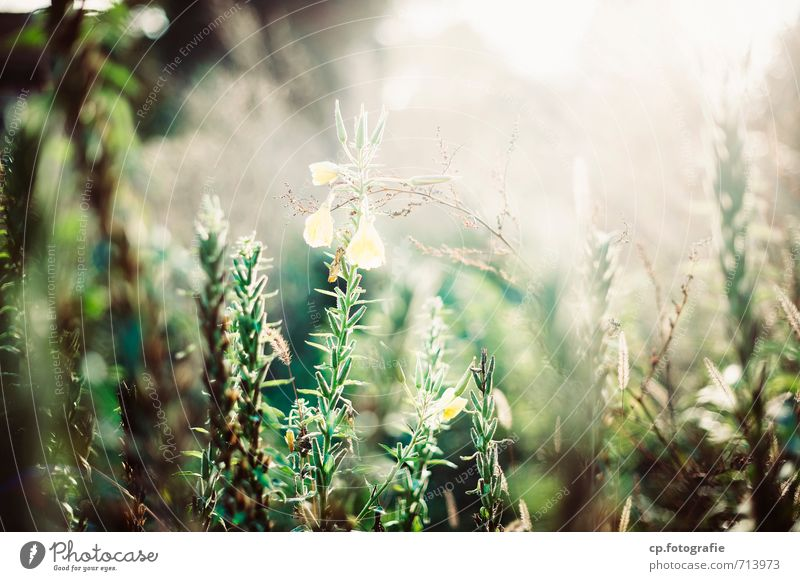 Nature Plant Summer Flower Warmth Meadow Natural Garden Beautiful weather