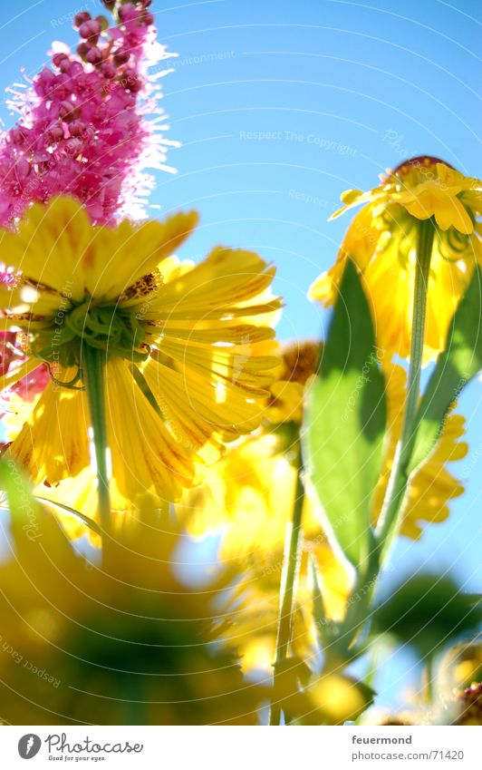 Colorful late summer... (1) Summer Multicoloured Happiness Blossom Light Bright Sun Flower Yellow Colour Joy Happy Garden Shadow multicolored colors merrily