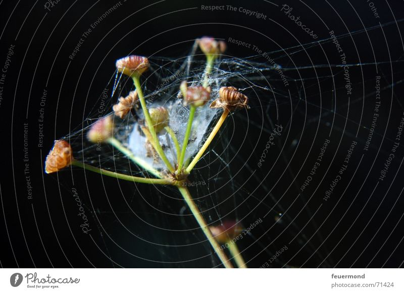 Flower Plant Blossom Garden Net Seed Spider Bud Spider's web