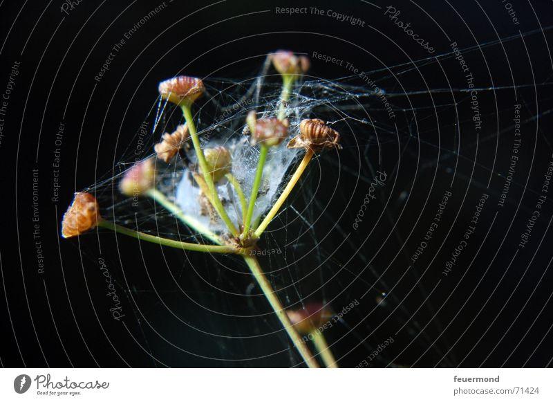 spider's seesaw Spider's web Blossom Flower Plant Net spun Seed Bud Garden nice bloom sun seeds spun