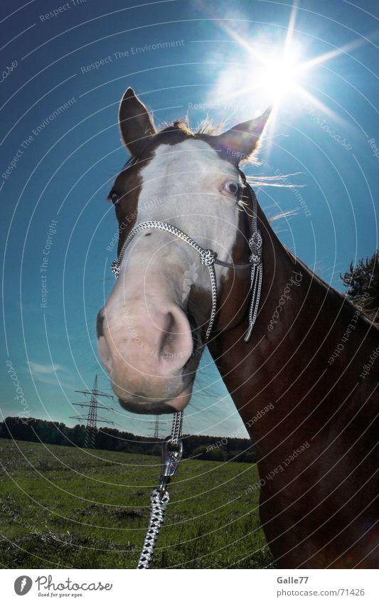 sun horse Horse Meadow Nostrils Back-light Halter Sun Sky paint Blue Fisheye