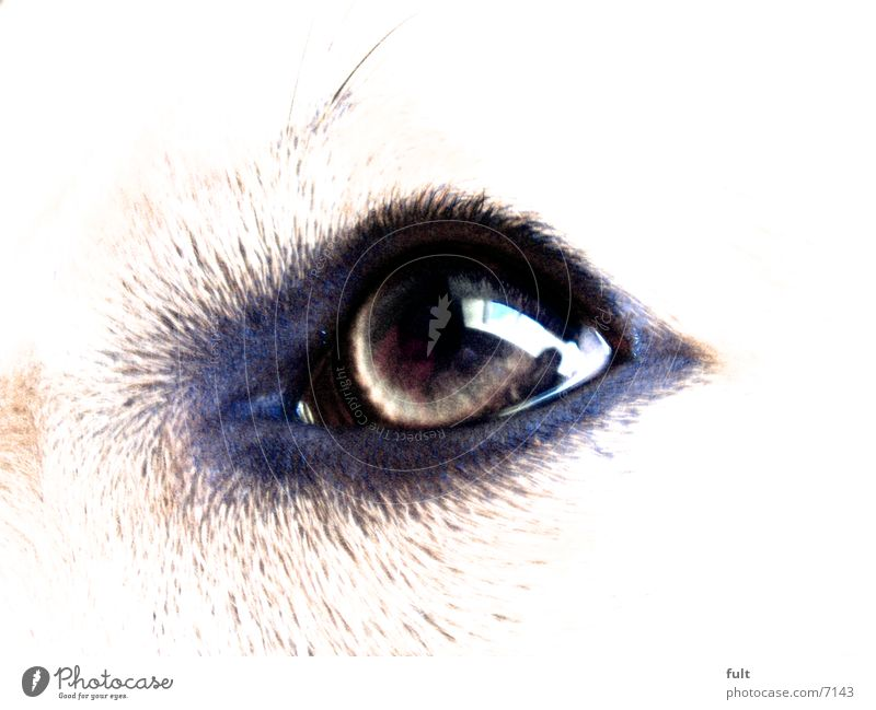 Eyes Style Dog Dog eyes