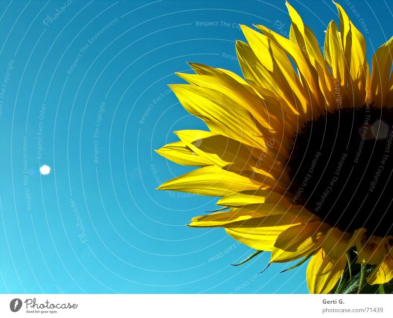 always shine beautifully Summer Sun Physics Alcohol-fueled Yellow Sunflower Sunflower seed Light Patch of light Beautiful weather Warmth Blue leaky