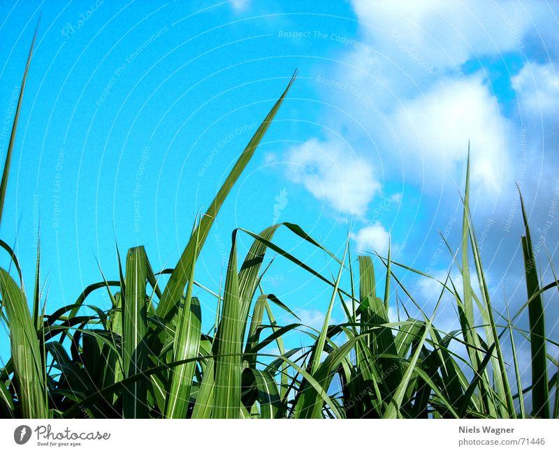 Sky Sun Green Blue Clouds Meadow Grass Bright Bushes