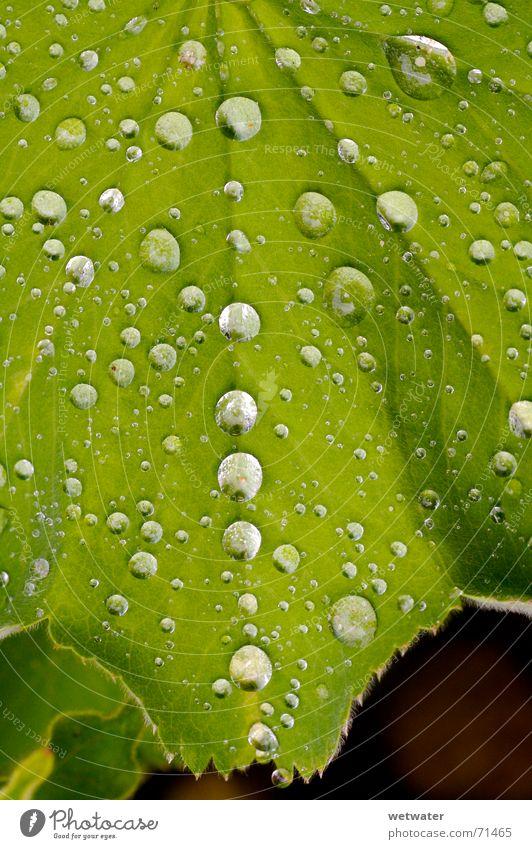 Nature Water Green Leaf Jump Spring Rain Drops of water Wet Fresh Near Row Dew Juicy Foliage plant