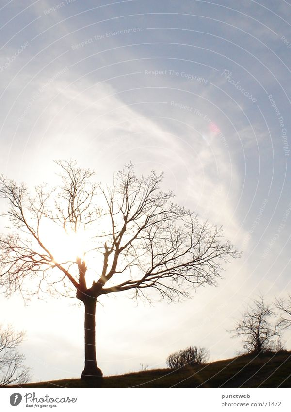 lonely Sky blue Single isolated tree Silhouette scatered clouds