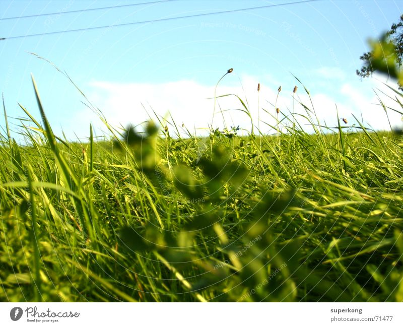 000 Love of nature Indian Summer Blade of grass Juicy Class outing Meadow Tree Bushes Spring Grass Happiness Transience Alpine pasture Worm's-eye view