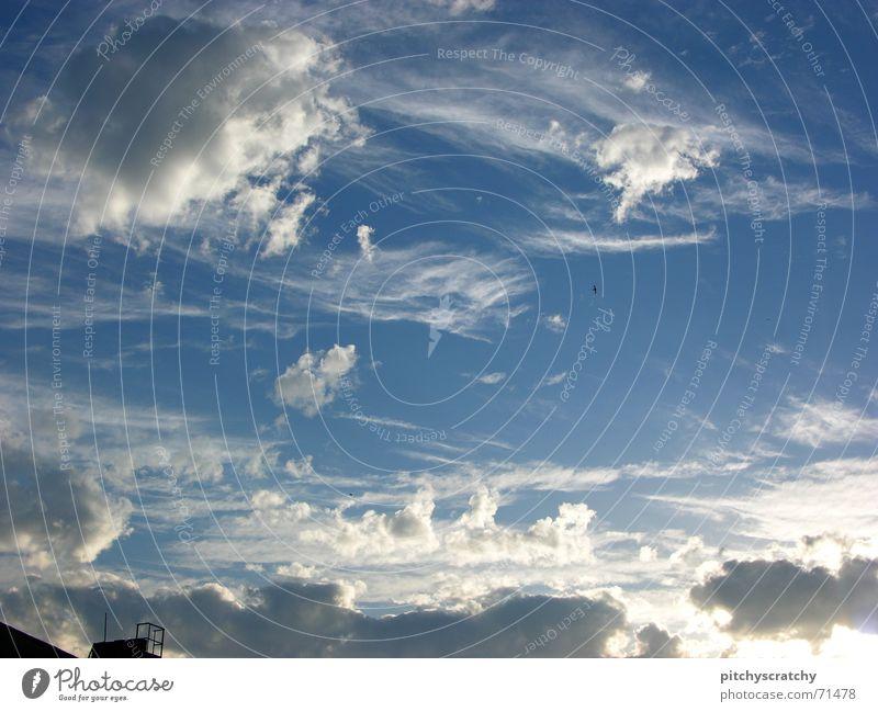 Heaven can't wait Clouds Summer Bird Cumulus Sky Beautiful Blue Sun Chimney Canopy (sky) Firmament