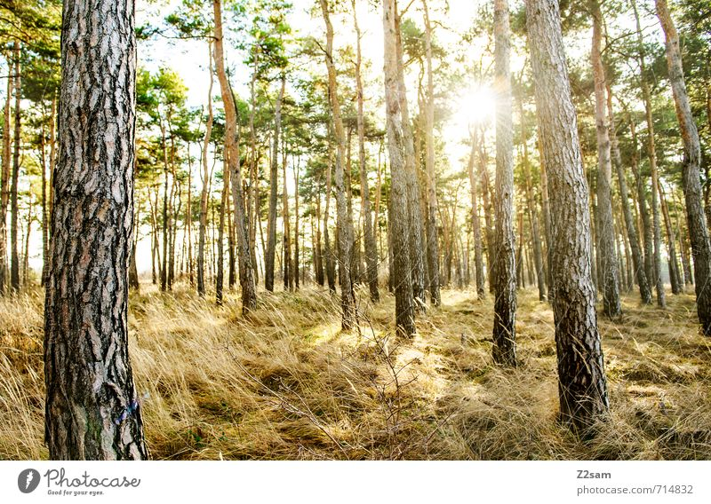 back to the woods Environment Nature Landscape Sun Sunrise Sunset Sunlight Spring Summer Plant Tree Grass Bushes Forest Relaxation Esthetic Authentic Fresh