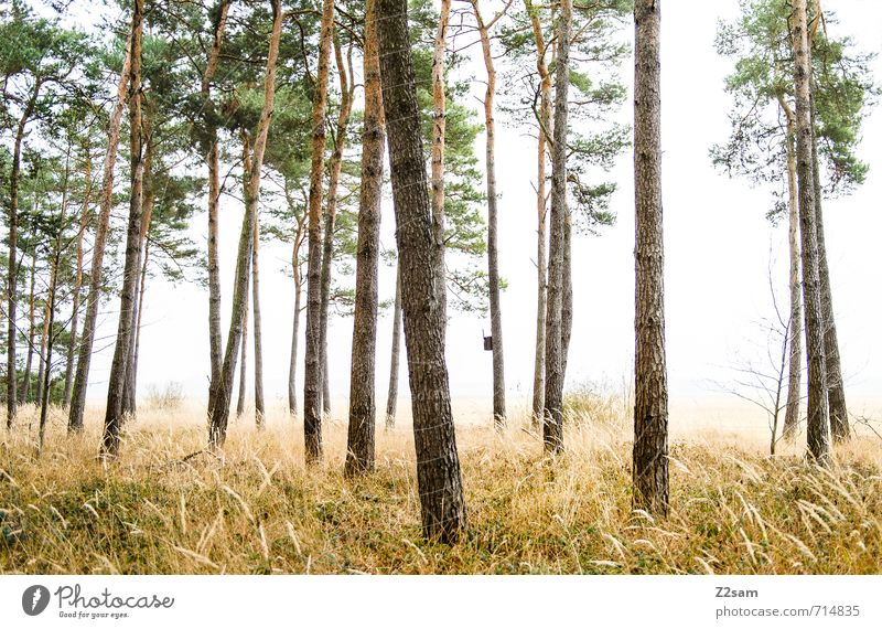 Nature Green Plant Tree Sun Loneliness Landscape Calm Cold Forest Yellow Environment Autumn Spring Grass Natural