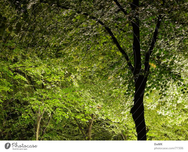 Nature Tree Green Calm Forest Dark Relaxation Visual spectacle