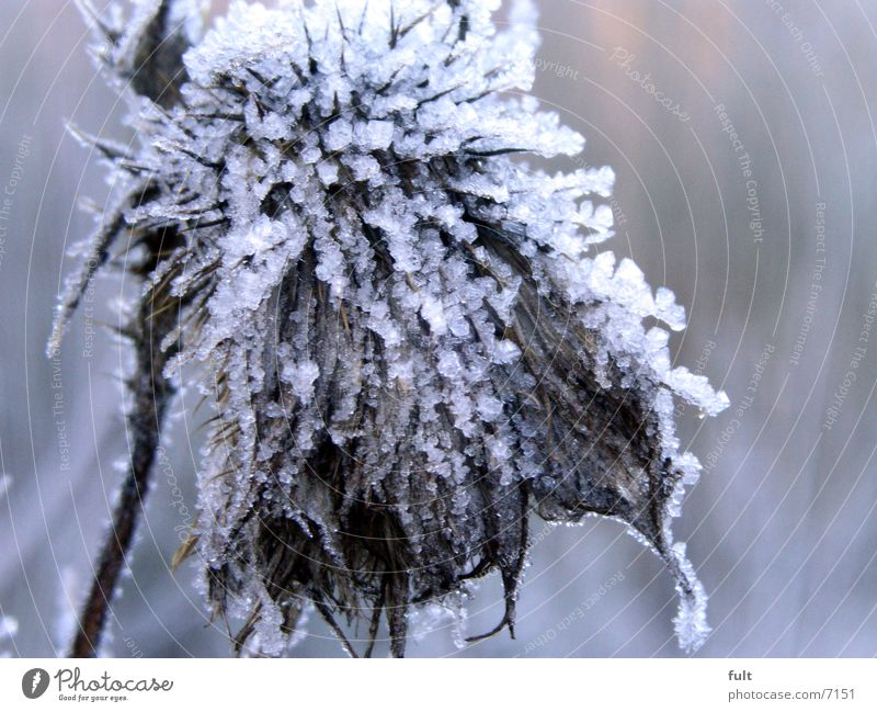 chill Plant Cold Winter Frost Ice marco Old