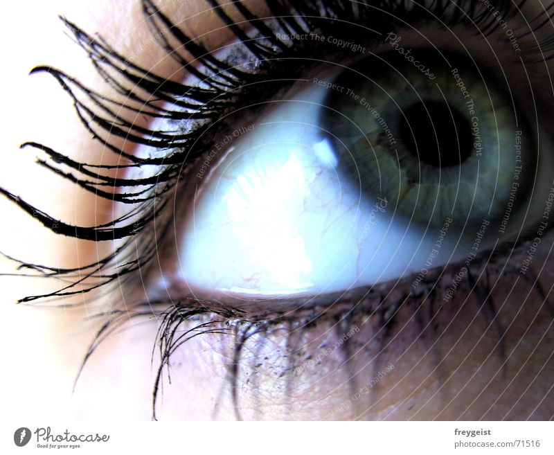 Blue Green Beautiful Black Colour Eyes Emotions Gray Style Dream Earth Lake Glittering Gate Snapshot Fantasy literature