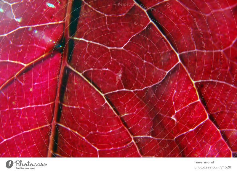 lifelines Vessel Leaf Autumn Red Multicoloured Cold Winter Tree Light Autumnal