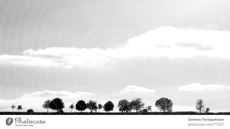 Sky Tree Summer Clouds Loneliness Forest Meadow Sadness Field Wind Branch Agriculture Individual Skyline Americas Flat