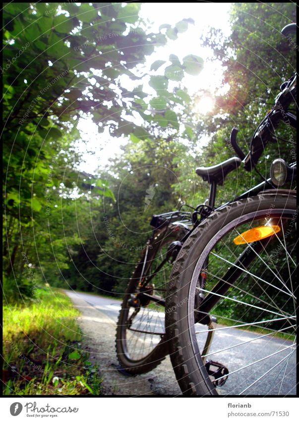 Sun Summer Joy Street Forest Landscape Bicycle Lake Baggersee