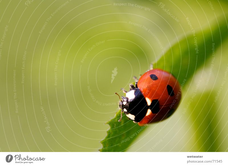 Nature Flower Green Red Summer Joy Leaf Black Yellow Jump Blossom Spring Small Insect Point Ladybird