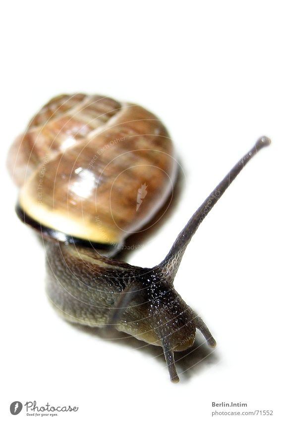 Ey Schnegge... Animal Mucus White Light Snail Nature Armor-plated Colour