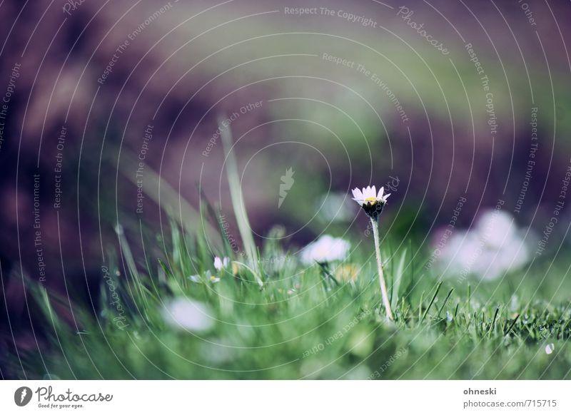 Flower Life Spring Grass Idyll Joie de vivre (Vitality) Hope Daisy Spring fever