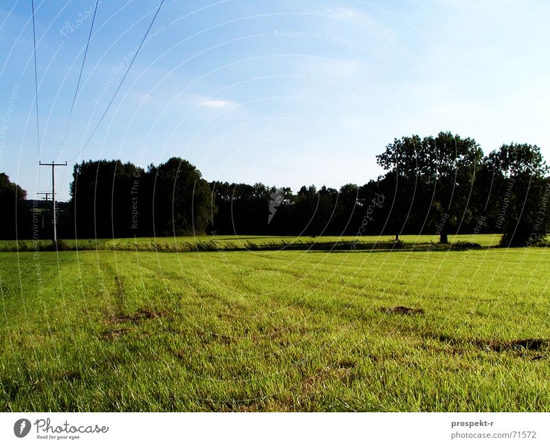 Blue-Dark-Green Meadow Tree Electricity Cable Panorama (View) Sky Dusk Large