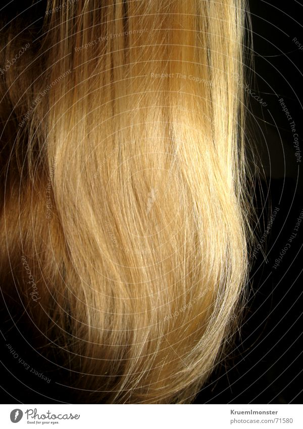 Hair and hairstyles Waves Glittering Blonde Long Smoothness Undulating Lamb's lettuce