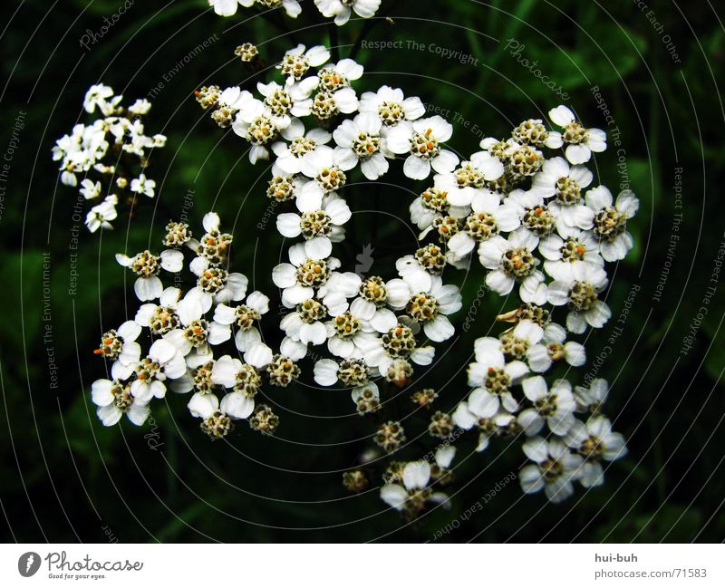White Green Plant Flower Loneliness Black Dark Grass Blossom Together Multiple Pollen Undergrowth Sprinkle
