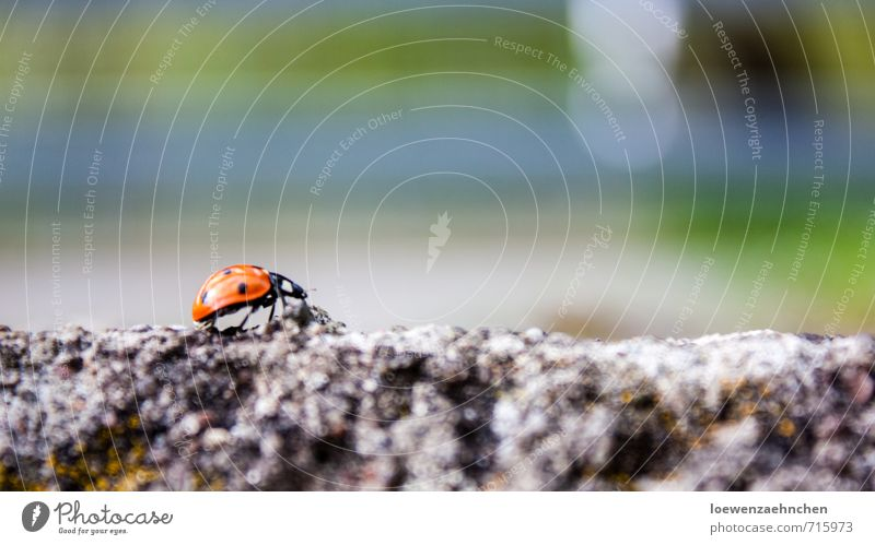 path of happiness Animal Spring Beautiful weather Wild animal Beetle 1 Concrete Movement Crawl Walking Hiking Athletic Small Multicoloured Happy Success Power