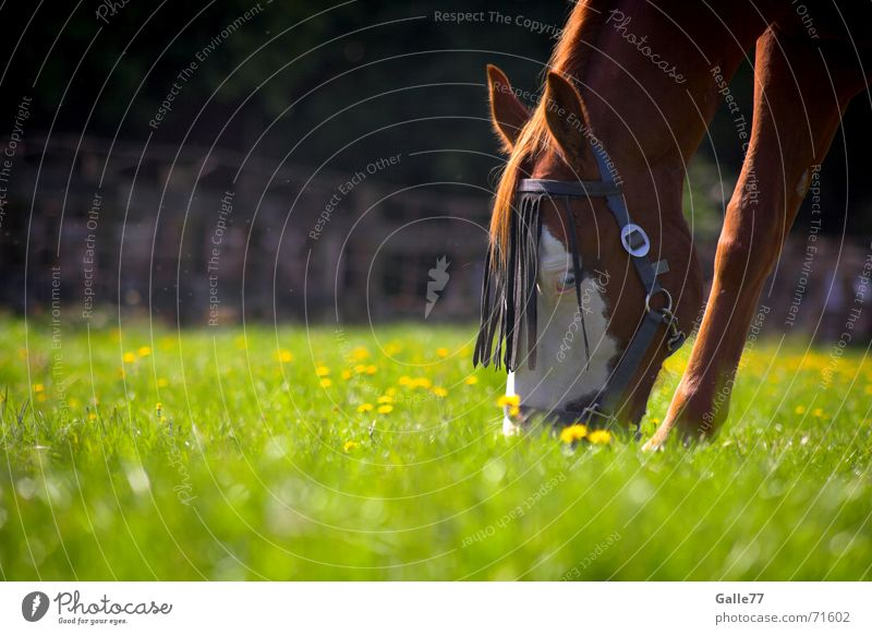 Summer Calm Meadow Nutrition Grass Food Fresh Horse Delicious Pasture Appetite To enjoy To feed Juicy Sense of taste Animal