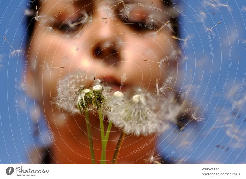 Blue Summer Girl Face Happy Air Wind Flying Desire Dandelion Blow Seed Allergy Child Pollination