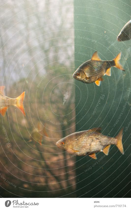 Nature Blue Water Tree Landscape Calm Animal Environment Swimming & Bathing Wild animal Group of animals Fish Serene Zoo Hover Aquarium