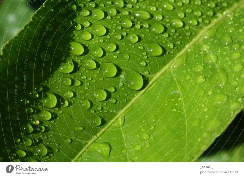 Water Green Plant Leaf Rain Drops of water