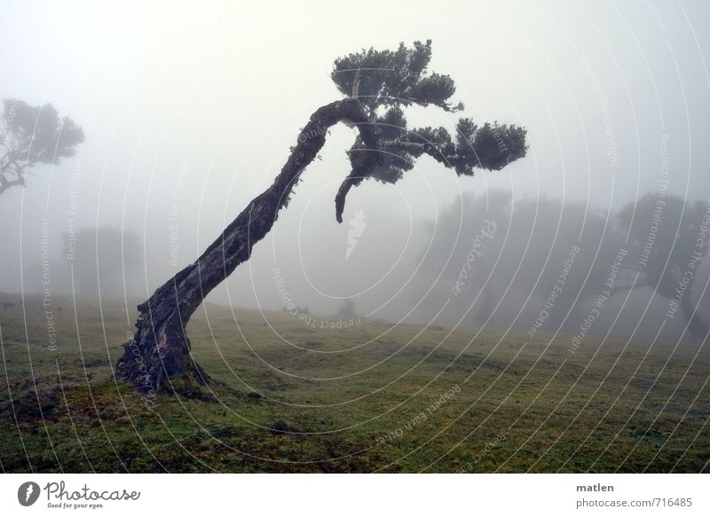 Nature Old Green Plant Tree Landscape Forest Meadow Grass Gray Brown Weather Fog Bad weather Headstrong
