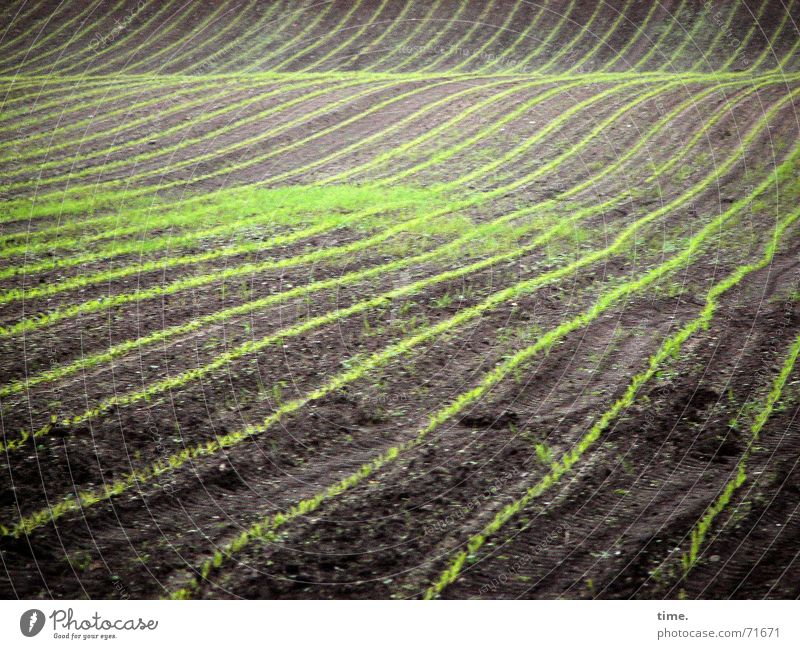 Nature Spring Line Contentment Field Waves Earth Might Authentic Carpet Progress Diligent Swing Sowing Modest Maize