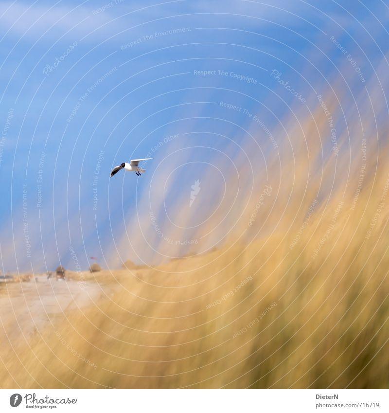 Sky Blue Water Ocean Animal Beach Yellow Grass Sand Bird Wild animal Baltic Sea Seagull Mecklenburg-Western Pomerania Wustrow