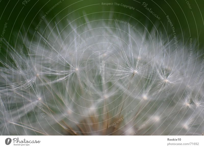 Nature Beautiful Flower Green Dream Near Uniqueness Fantastic Delicate Dandelion Smooth Reaction Heavenly Fascinating