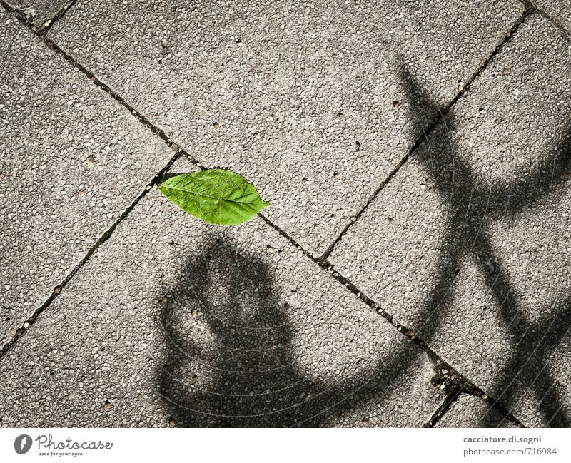 Green Loneliness Leaf Black Environment Sadness Lanes & trails Death Spring Gray Lie Gloomy Concrete Threat Simple Broken