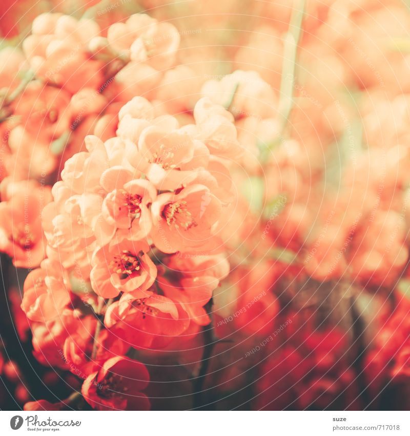 Plant Beautiful Flower Red Warmth Blossom Love Spring Garden Moody Pink Leisure and hobbies Growth Bushes Esthetic Fantastic