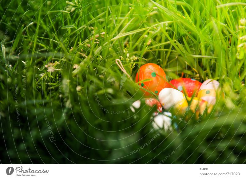 Beautiful Green Meadow Spring Grass Small Happy Natural Feasts & Celebrations Garden Weather Infancy Decoration Happiness Cute Easter