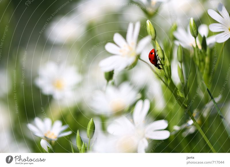 splotch of paint Nature Plant Animal Spring Summer Beautiful weather Flower Meadow Wild animal Beetle 1 Crawl Natural Serene Calm Ladybird Colour photo