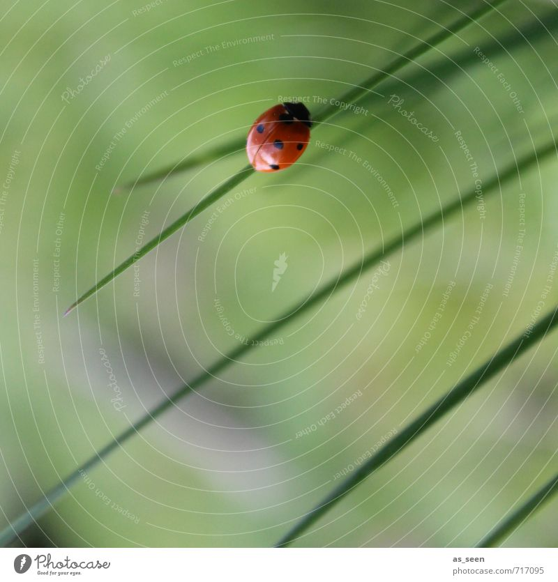 Nature Green Plant Summer Relaxation Red Calm Animal Black Environment Meadow Spring Happy Natural Healthy Garden