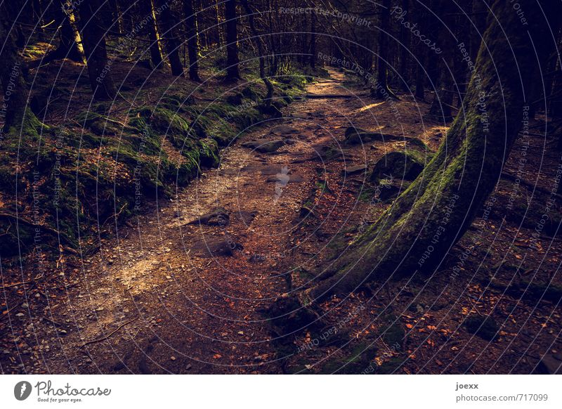 This way Landscape Beautiful weather Tree Forest Lanes & trails Creepy Brown Green Black Idyll Perspective Colour photo Subdued colour Exterior shot Deserted