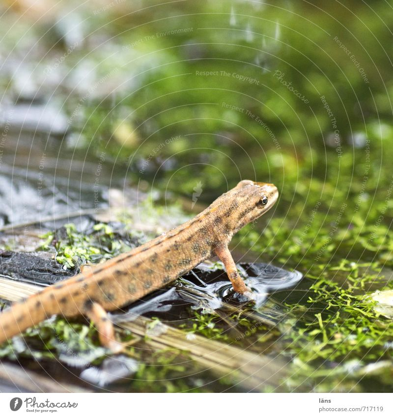 up and away Newt Amphibian Frog Water Pond Observe