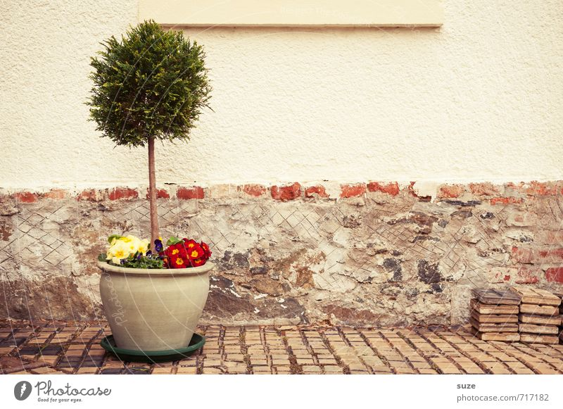 Down-to-earth in a pot Leisure and hobbies Living or residing House (Residential Structure) Decoration Spring Tree Flower Pot plant Wall (barrier)