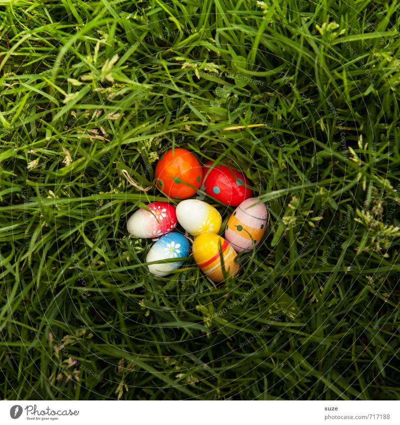 Coloured egg salad Lifestyle Leisure and hobbies Playing Garden Decoration Feasts & Celebrations Easter Infancy Spring Grass Meadow Discover Happiness