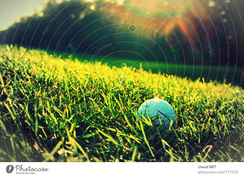 Golf ball in the sun Leisure and hobbies Mini golf Sports Ball sports Golf course Nature Grass Meadow Success Hip & trendy Athletic Green