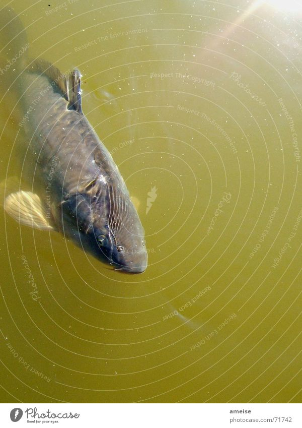 Water Sun Freedom Small Fish Pond Surface of water Carp Animal