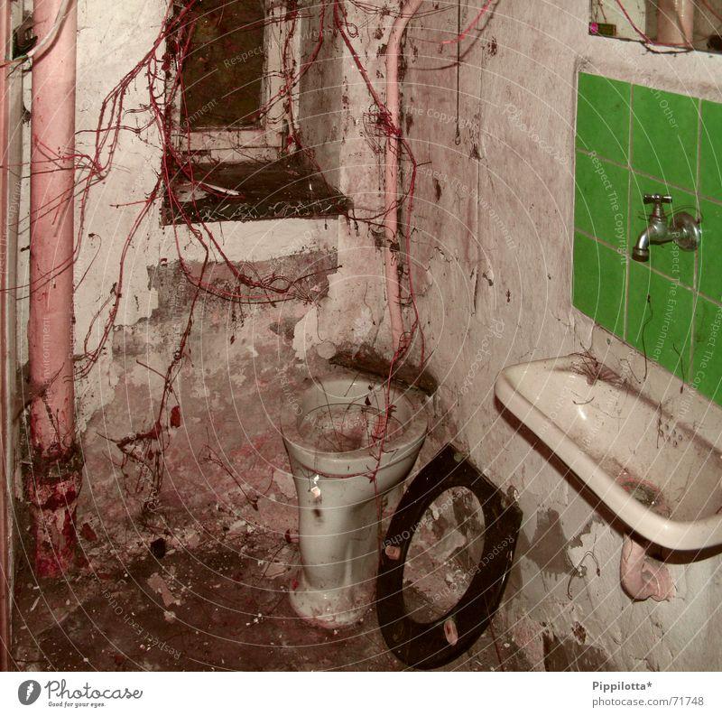 Old Plant Window Dirty Putrefy Derelict Toilet Disgust Flow Forget Sink Rain gutter Malodorous