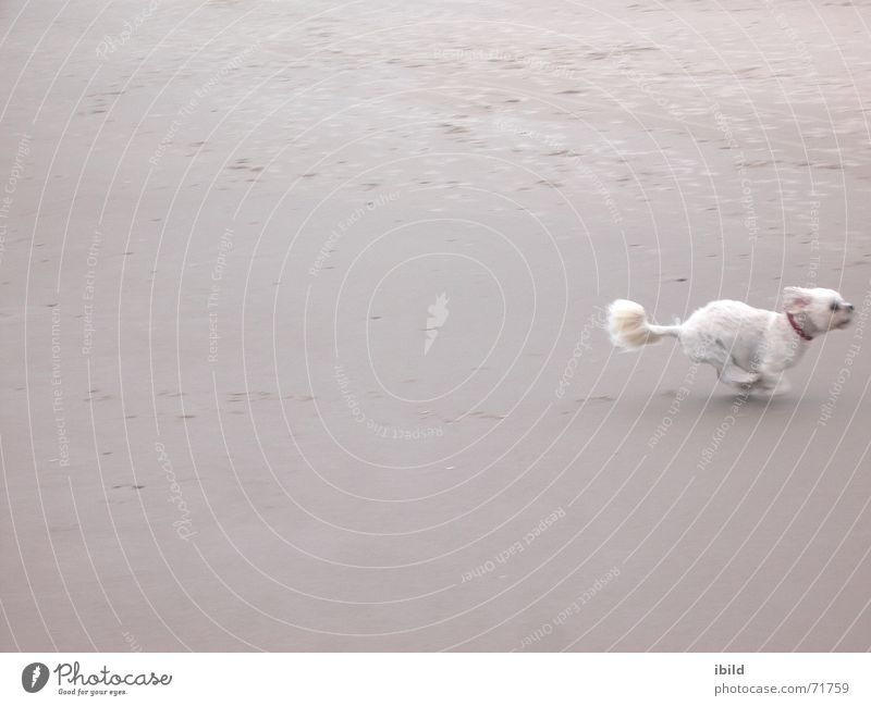 by no means Beach Dog Small Speed Sand Walking Funny