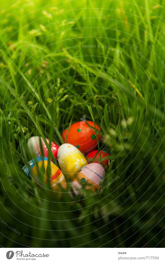 Beautiful Green Meadow Spring Grass Small Natural Feasts & Celebrations Garden Weather Infancy Decoration Happiness Cute Uniqueness Easter